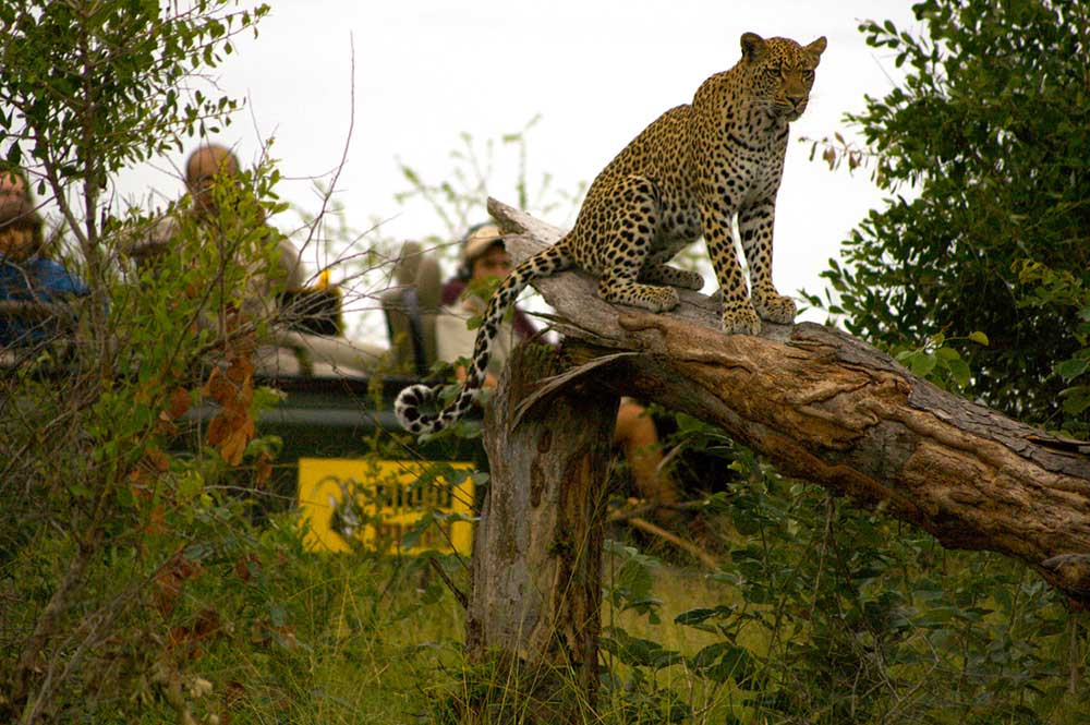 On Safari at Mala Mala