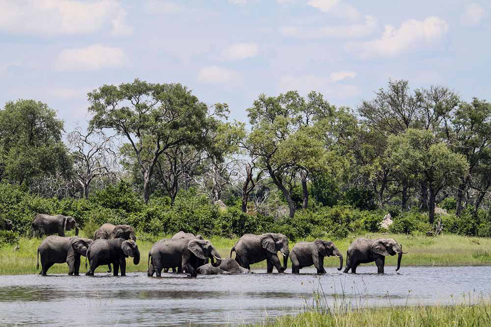 Seeing Elephant on a Botswana Safari