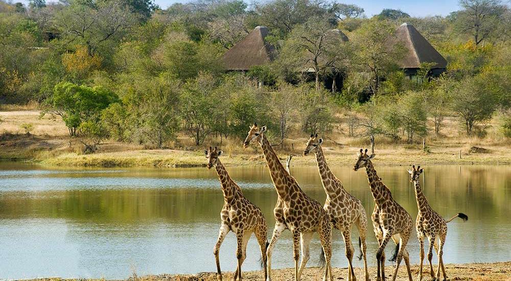 Kruger Safari And Mozambique Africa Honeymoon